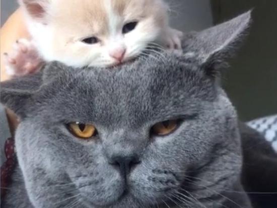不开心就看这些小家伙,心情瞬间就好了!