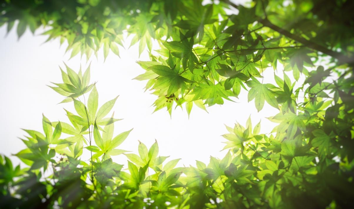 绿叶4k超高清护眼壁纸