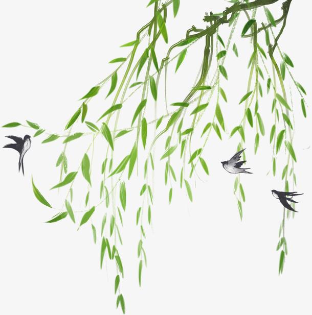 柳条柳枝燕子春天