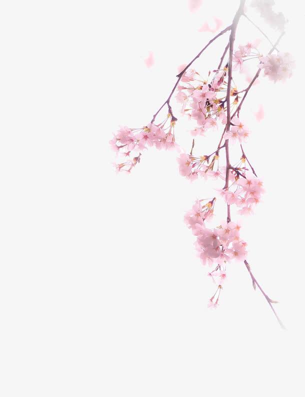 唯美中国古风水彩插画樱花