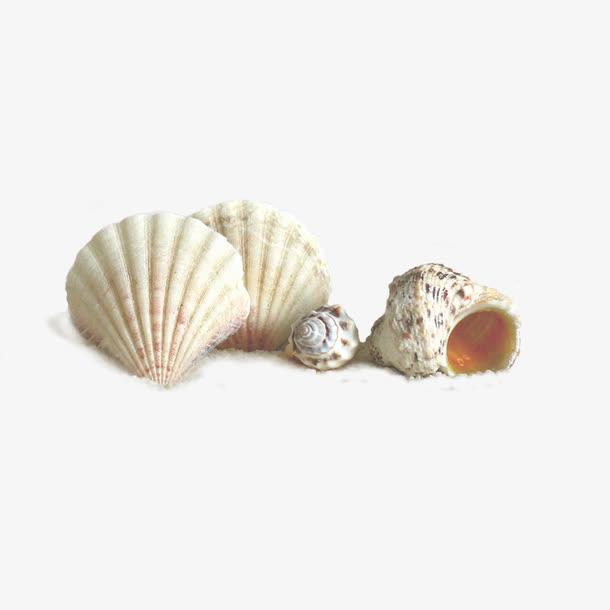 数颗白色贝壳